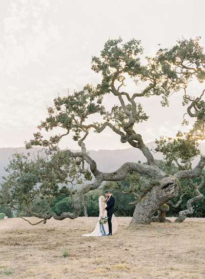 Young couple getting married under archaic tree