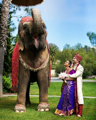 hindu couple elephant la jolla wedding photographer