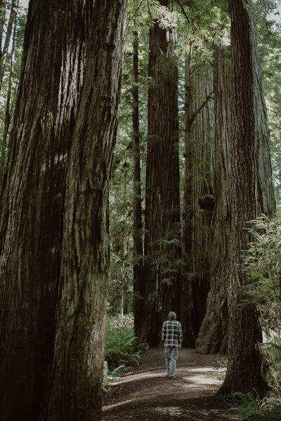 redwoodsnationalparkhoneymoon-wentzekphoto-1