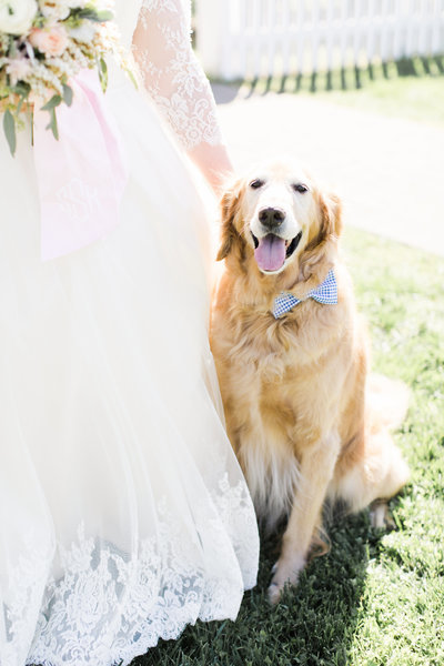 Bride and golden retriever at the Carnton Plantation taken by Indianapolis wedding photographers Ivan & Louise.