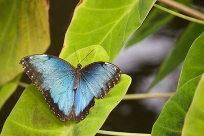 Butterfly_Programs that can change your life_Sue Ward