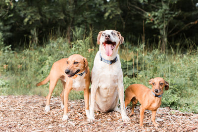 Three rescue dogs