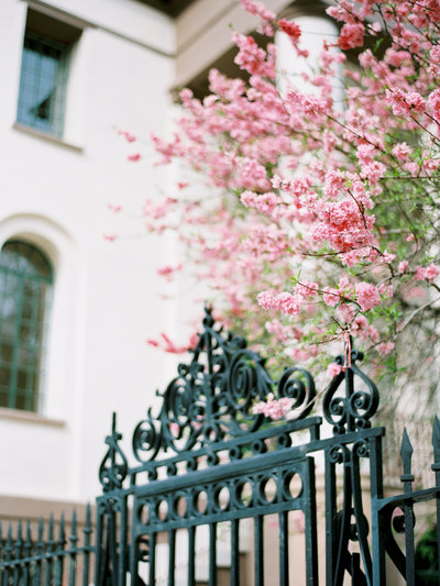 Charleston-SC-iron-gates-azaleas
