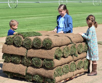 kids with a pallet of sod (Iva 8, Betty 6, Finn 4)