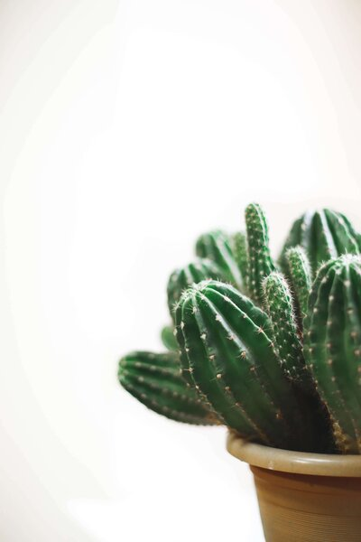closeup-photo-of-cactus-plant-in-a-pot-837267