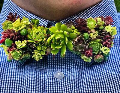 fresh succulent wooden bow tie