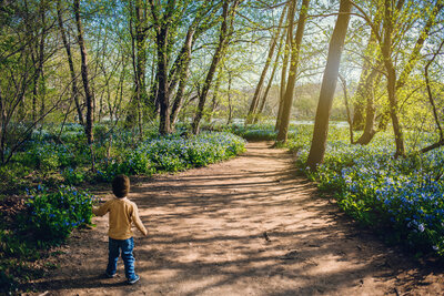 shauna-scott-photography-little-boy-with-bluebells