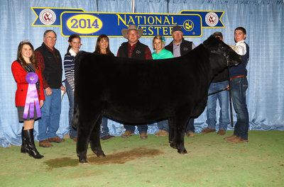 Dameron Blackbird 2161_14NWSS