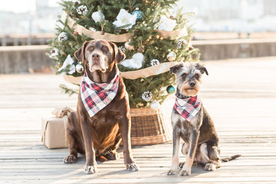 Two dogs wearing plaid scarves in the Charlestown Navy Yard