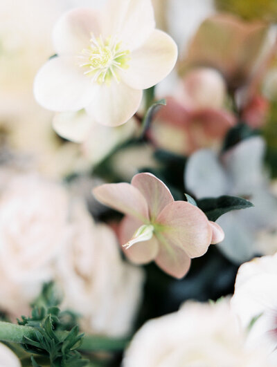 Close up of blush and white  hellebores  in wedding centerpiece