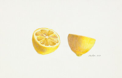 Clair gallery drawings _Sliced Lemon_