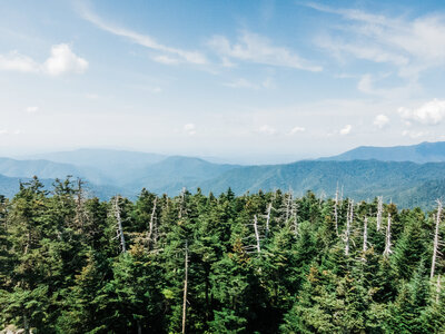overlook view of pine trees and blue skies