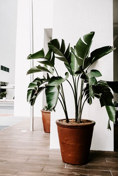dark-green-plants-decor-decoration-1974508