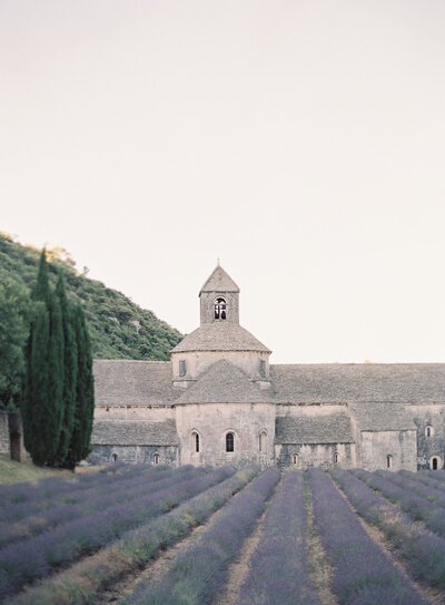 Sénanque Abbey in Provence with dozens of rows of freshly grown lavender