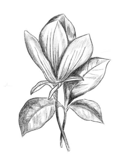 Floral-Drawing-2
