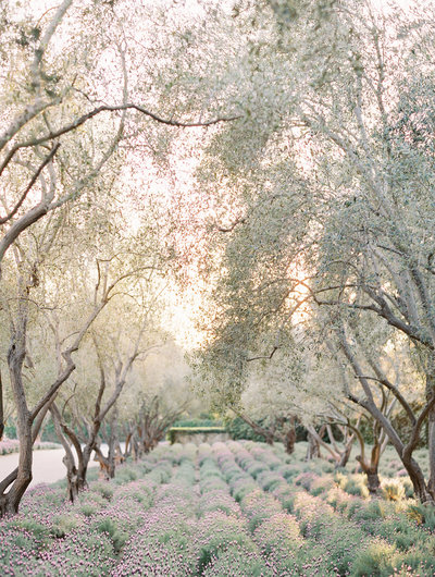 san-ysidro-ranch-wedding-3