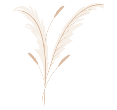 pampas grass illustration