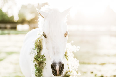 washington-oregon-equine-photographer-24
