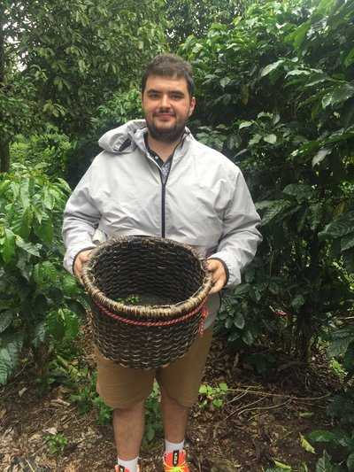 tourist collects coffee in costa rica