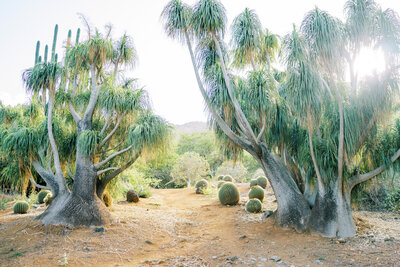 oahu-location-desert-botanical-gargen-8