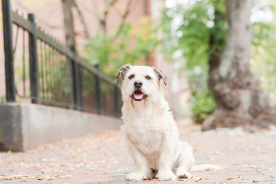 Rescue Terrier in South End