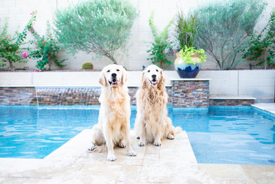 Two Dogs by Custom Pool