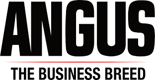 Angus - The Business Breed