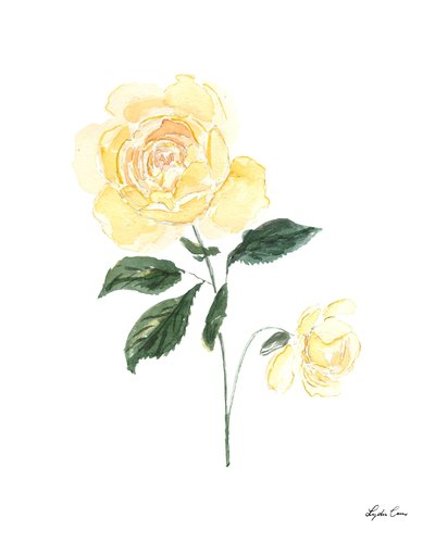 yellow rose watercolor floral