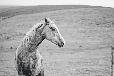 Horse in Ireland by Amanda Dumouchelle Photography