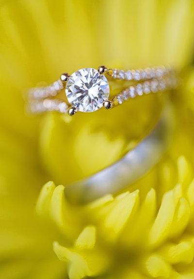 bright colorful yellow flower ring shot