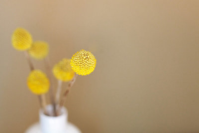 yellow_button_flower