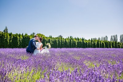 Bride and groom kissing in field of lavender at Woodinville Lavender in Washington