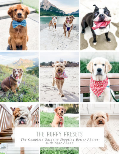 Puppy Preset Dream Guide