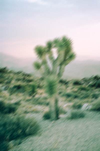 Joshua Tree Cactus Film Photography-1