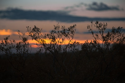 west-texas-photography-orange-sky-clouds-beautiful-flower-sunset-stock-image-leaves-dead-plants