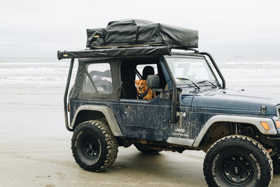 dog sitting in jeep