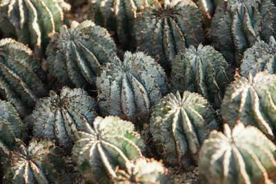 cactus-garden-pennsylvania-nature-kate-timbers-photography-1389