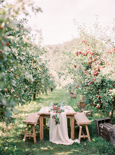 outdoor wedding dinner in an apple orchard in south of sweden