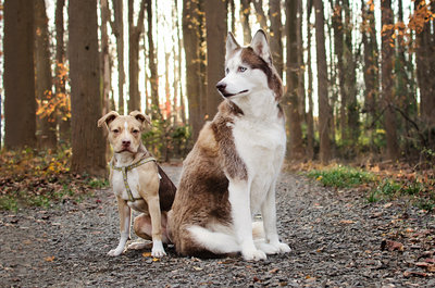 Beautiful dogs posing together