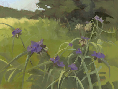 gallery - paintings _Spiderwort Morning_small