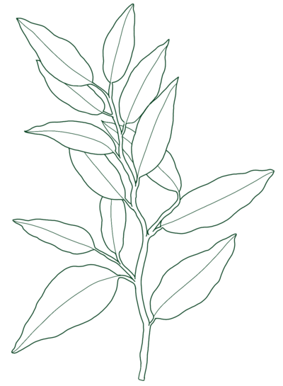 leaf-illustrationv2 green