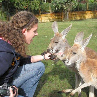 Feeding Kangaroos in Australia