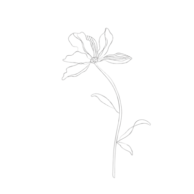 minimalist botanical line sketches - galerie design studio-03