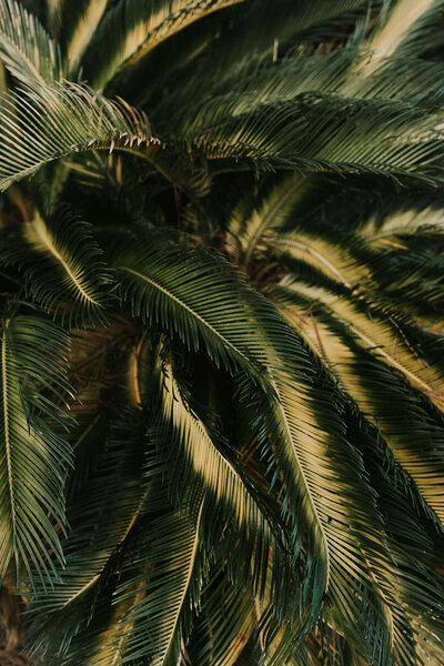 new-orleans-wedding-photographer-tropical-1