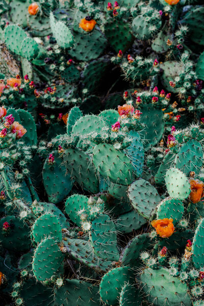 photo-of-orange-and-pink-petaled-flowers-on-cactus-plants-1253718
