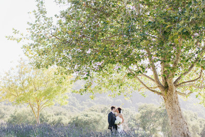 Wedding couple in Lavender field at Carmel Valley ranch