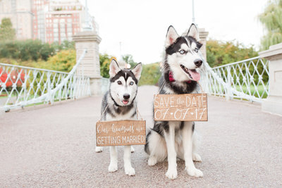 Two Husky Dogs wearing signs in Boston Public Garden