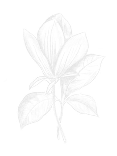 Floral-Drawing-1--white