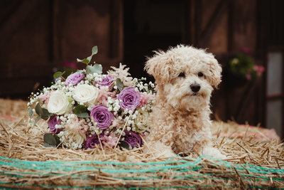 dog at wedding with bouquet