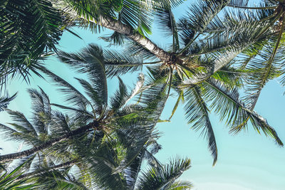 haute-stock-photography-tropical-vibes-final-31